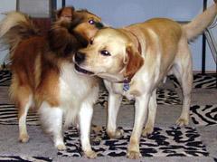 hunde-tuscheln